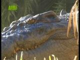 Стив Ирвин. Охотник за Крокодилами